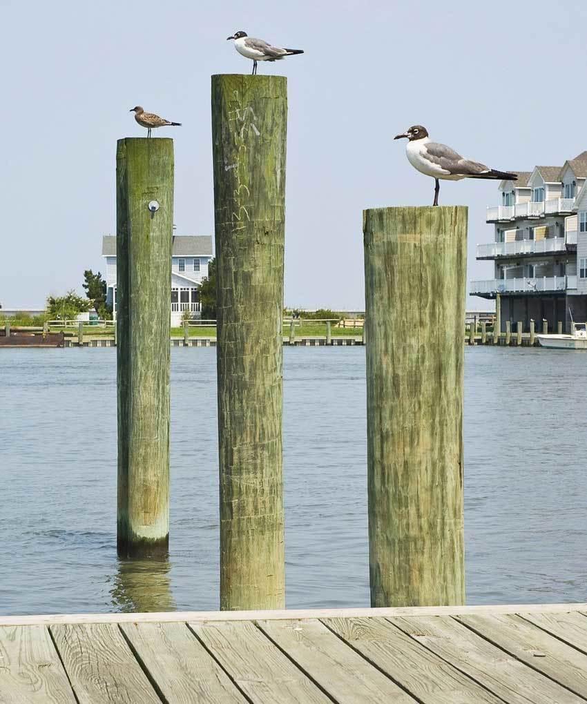 3 Pier Poles With Birds