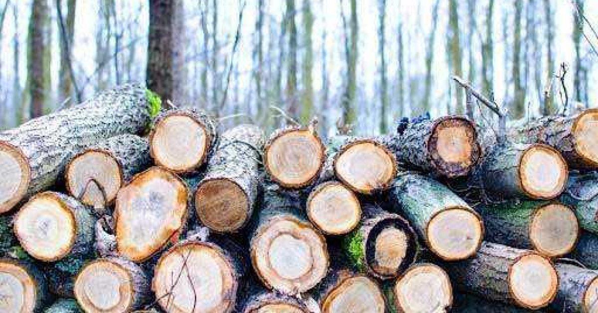Sustainability Treated Wood