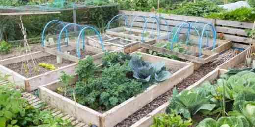 Treated lumber raised garden bed